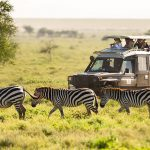 Africa Tour and Travel